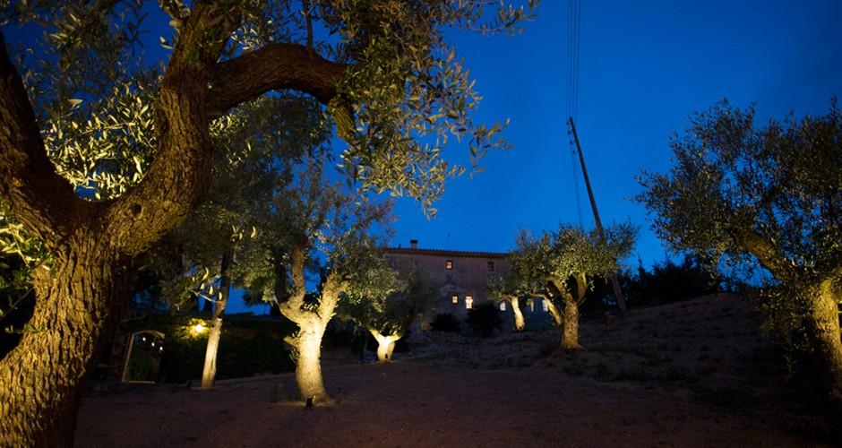jardín olivos