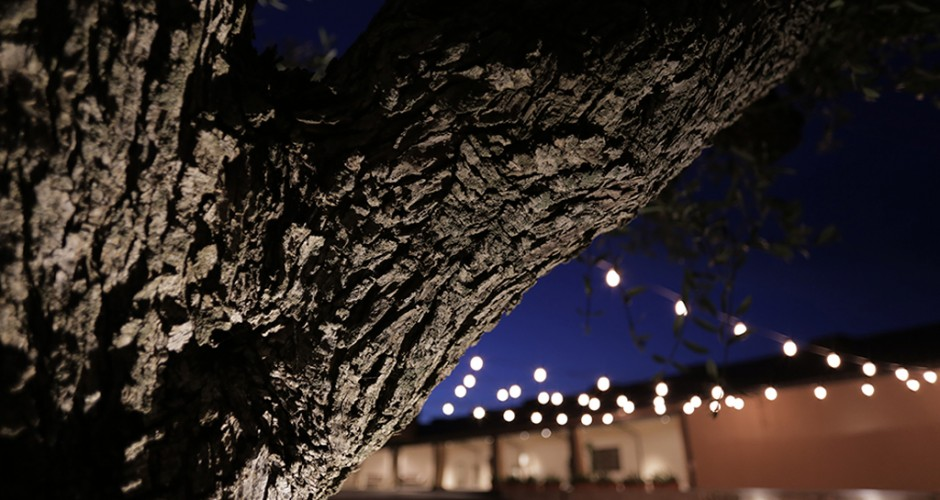 jardi oliveres